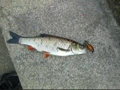 Открытие сезона спортивного рыболовства